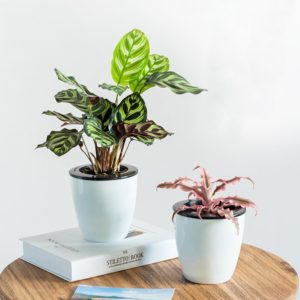Self Watering Planter White Flower Pot