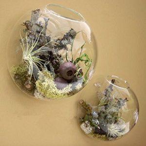 Wall Bubble Terrariums Glass Bowl